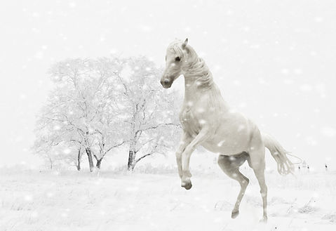 winter-1152630.jpg
