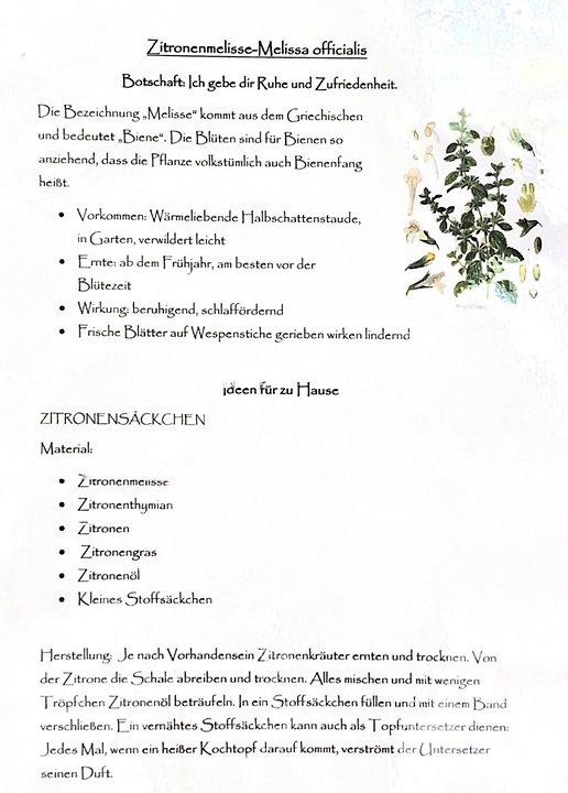 Zitronenmelisse-Melissa_officialis_edited.jpg