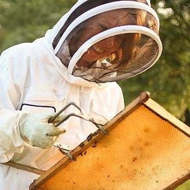 VB with bees cu.jpg