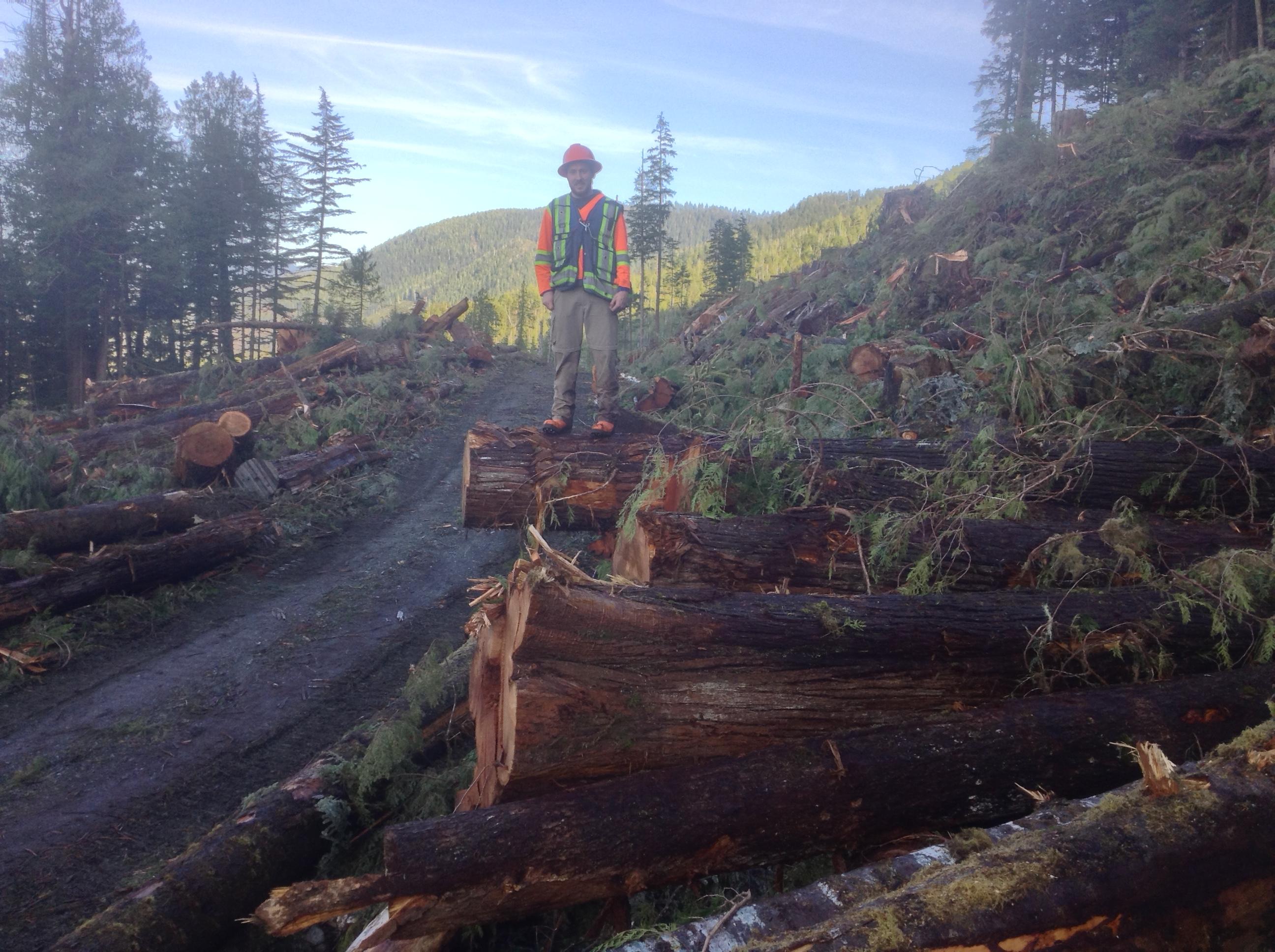 Decked Wood