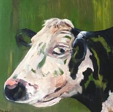 Moody Cow.jpg