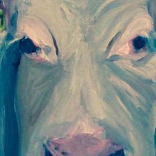 Longford Cow
