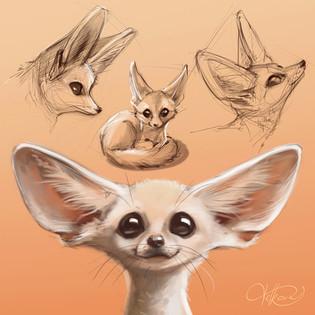 fennec_fox_velkova_w.jpg