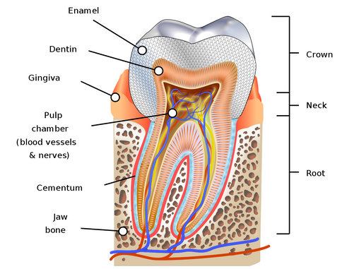Cavity & Tooth Decay : Symptoms, Causes & Treatment