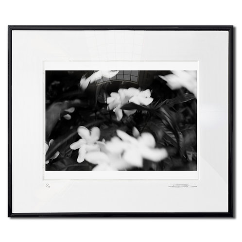Still movement, Framed 35mm B&W hand print