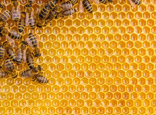 Honig – so viel Arbeit steckt drin!