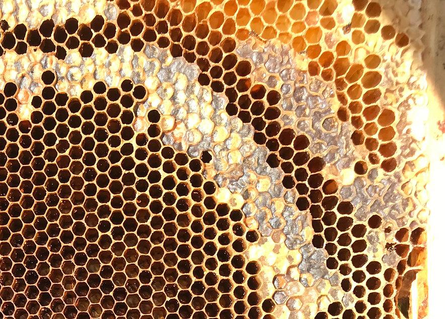 Teileise vrdekelte Honigwabe