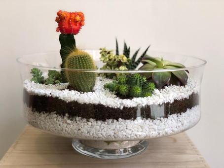 Xerojardinería, Plantas Xerófitas,  y los Mini Mundos