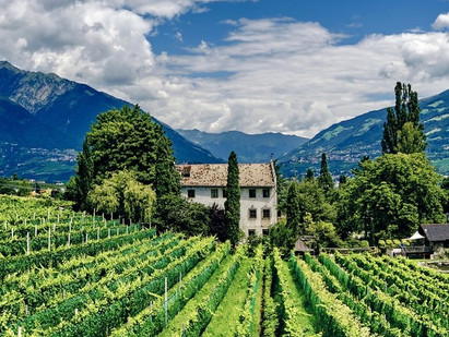 The Best Time to Go Wine Tasting