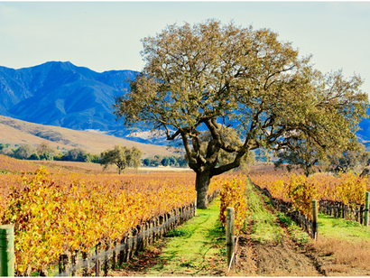 Why Santa Ynez, CA Should Be Your Top Destination for Wine Tours