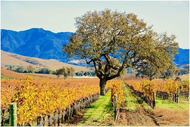 Santa Ynez Wine Tour