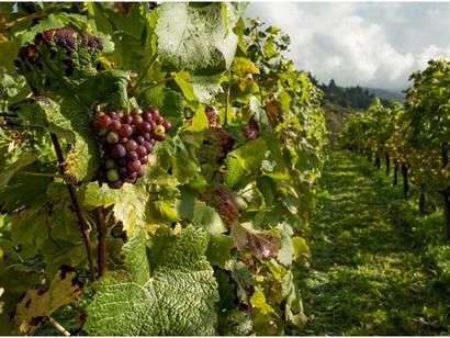 The Do's & Don'ts Of Wine Tasting Etiquette