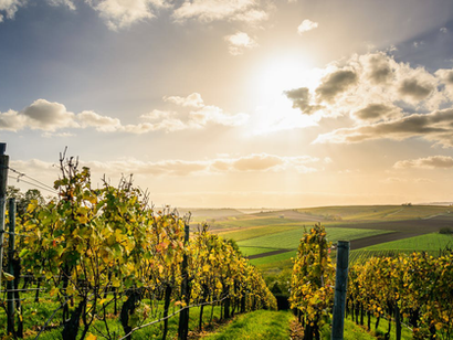 What To Expect On Your First Wine Tour