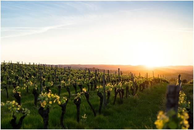wineries in california