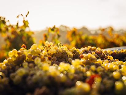 In the Spotlight: Whitcraft Winery, A Veteran of Santa Barbara Viticulture