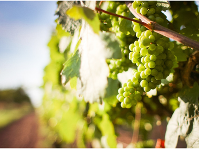Top 3 Tips Every Wine Travel Virgin Needs To Know