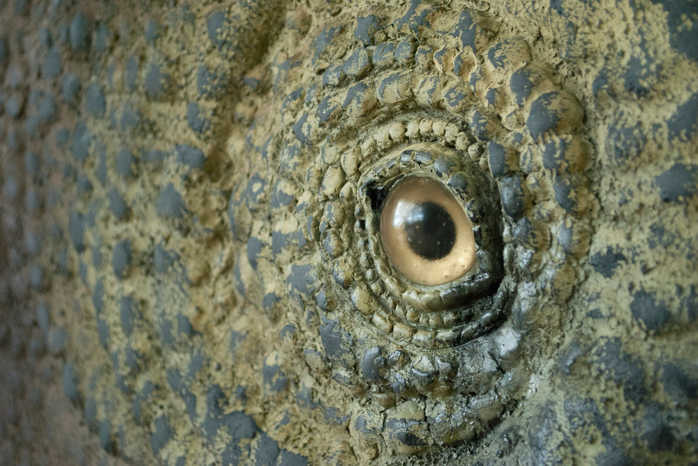Seeing into History at RBG through the eyes of a Triceratops