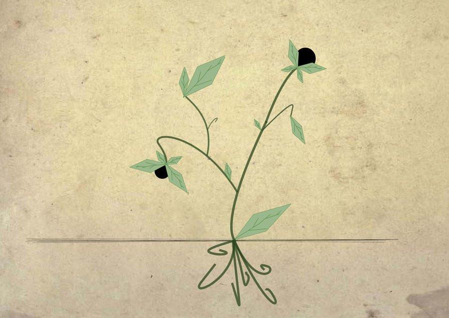 herbology_series__belladonna_by_tori_n0_uta-d5s6cl3
