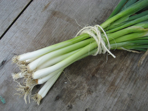 evergreen_scallion-bunch.jpg