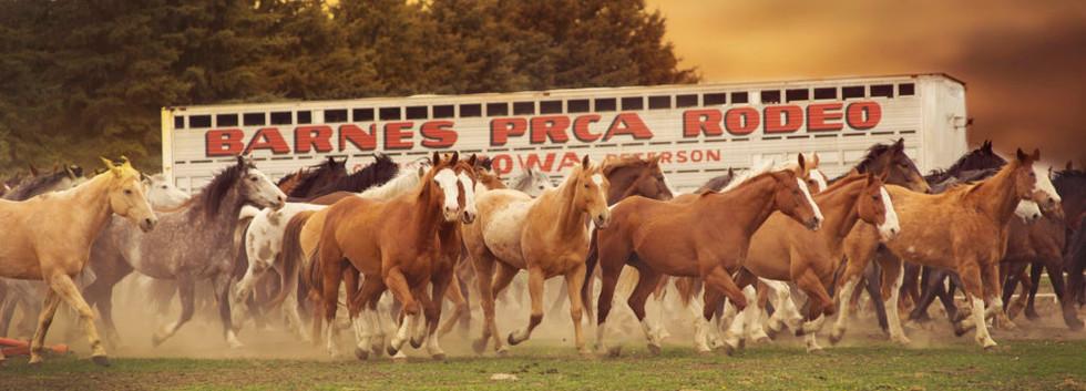 Barnes-PRCA-Rodeo_horses-1024x681.jpg