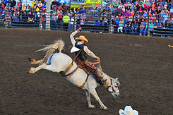 Pro Rodeo Competition