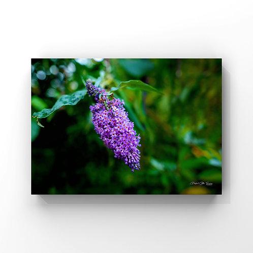 PurpleFlowerInScotland
