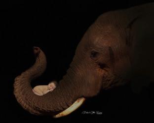 ElephantWM.jpg