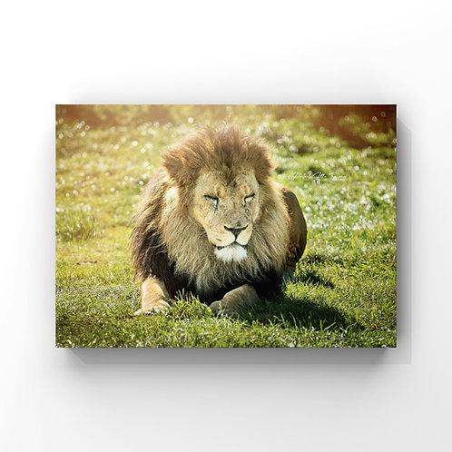 LionInScotland