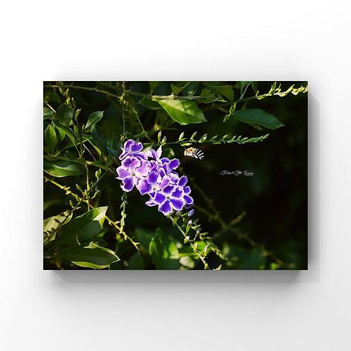 Flower2TheBee