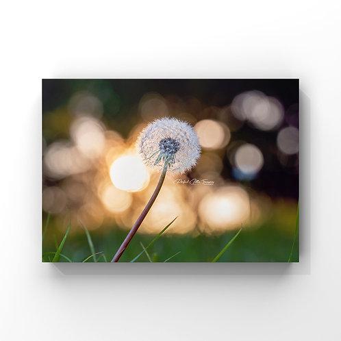 Dandelion-Landscape