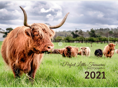 2021 Highland Cow Calendar