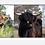 Thumbnail: Daisy, Gracie & Marie Mug