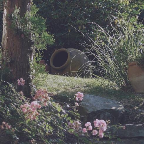 Jardinage à Domicile   Composition végétale