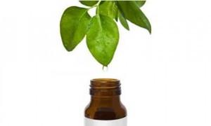 Tea tree oil – olej s mnoha účinky
