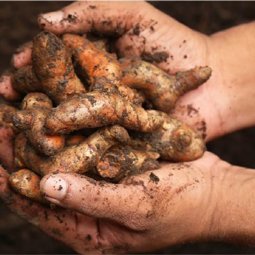 Curcumin Harvest