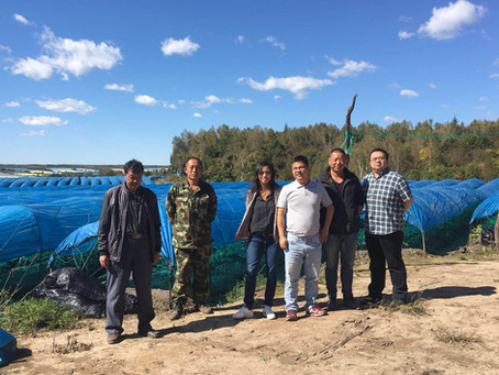 Ginseng: touring the Jilin Province ginseng farms with BWN