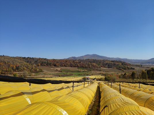Ginseng: exploring field-cultivated ginseng planting with BWN