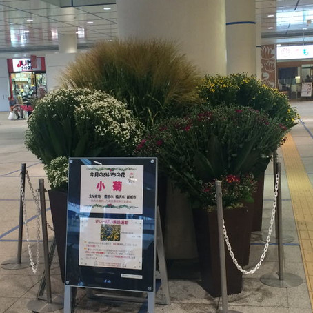 2015年9月小菊  オアシス21会場 中支部