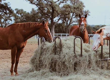 Make In the Irons a Happy Home for your Horses!