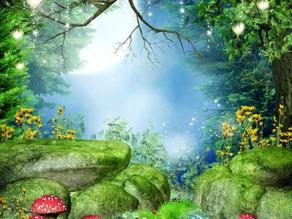 Year One - Enchanted Woodland