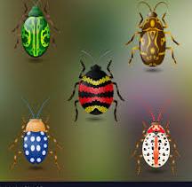 Red Class- Beautiful Beetles! Week 7