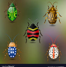 Red Class- Beautiful Beetles! Week 7