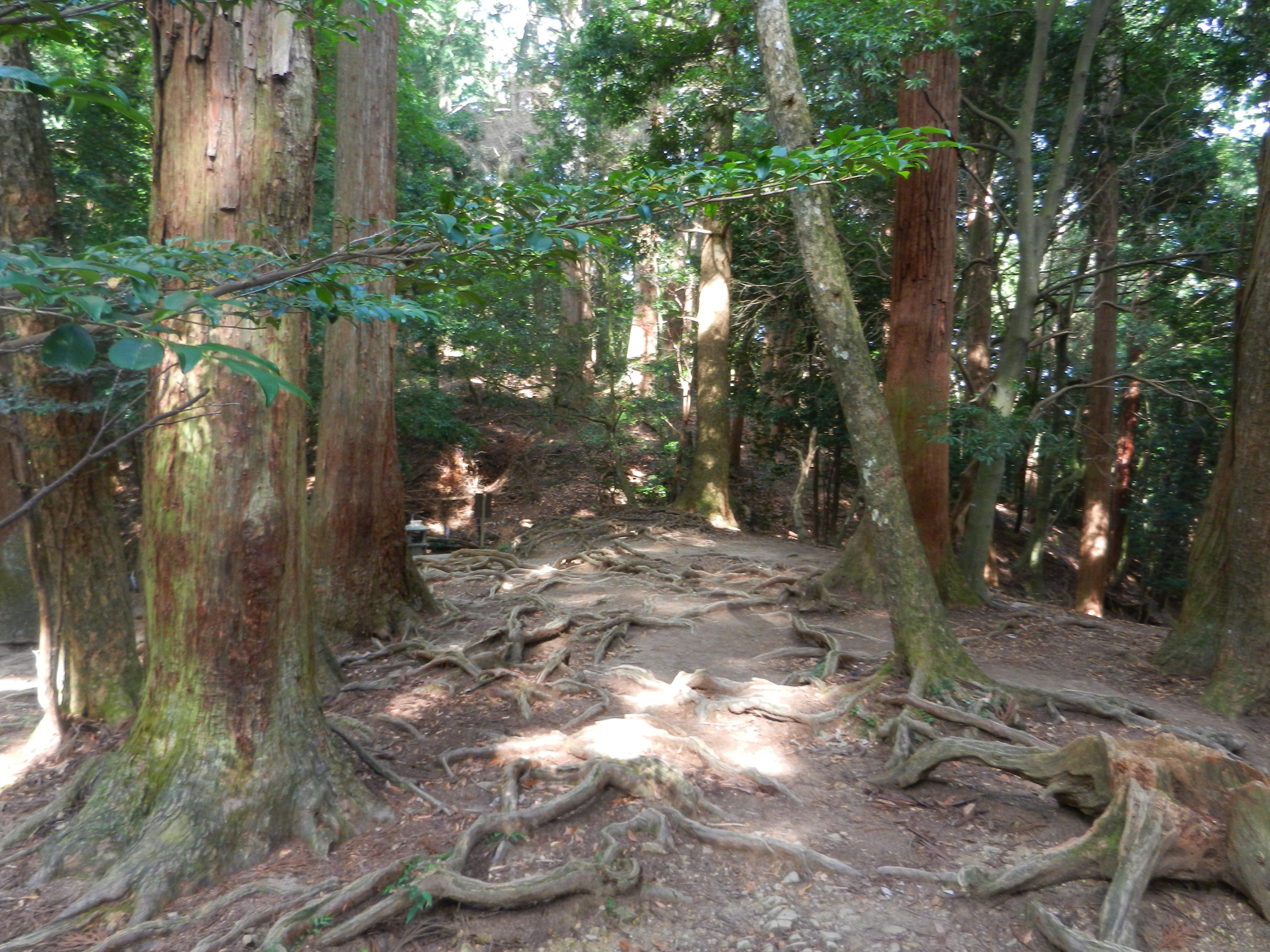 Meditatin on Mount Kurama