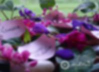 website social media graphics (3).png