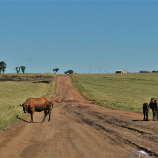 Further into the Transkei