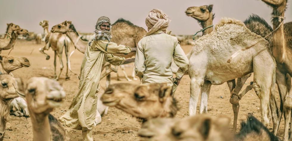 Sudan_99.jpg