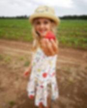 Autocueillette de fraises