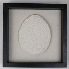 Porcelain Fossil