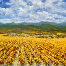 Golden Vines Of Napa