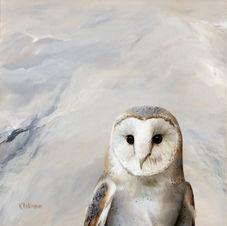 Peekng Bird #13 Barn Owl